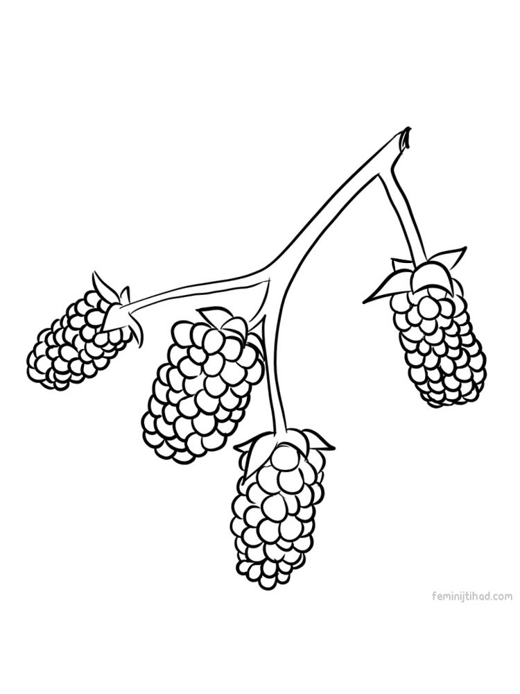 Printable marionberry coloring images pdf