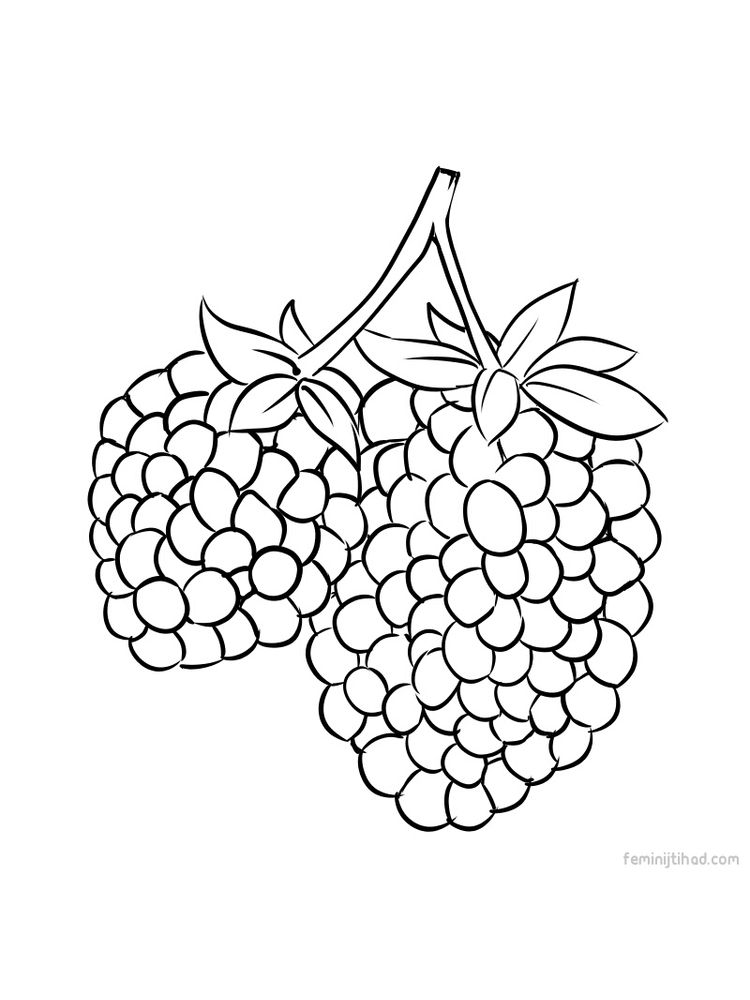 Printable marionberry coloring picture download