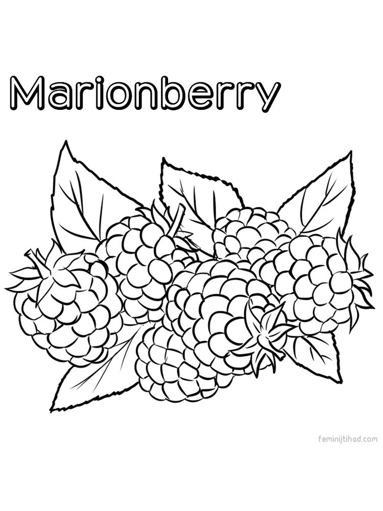 Printable marionberry for coloring print