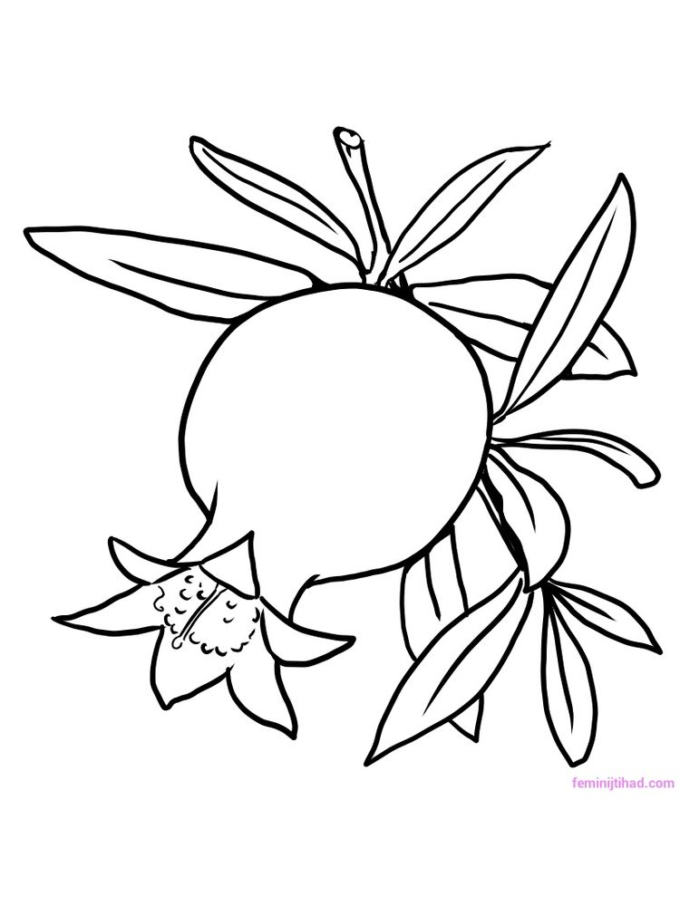 Printable pomegranate image for coloring