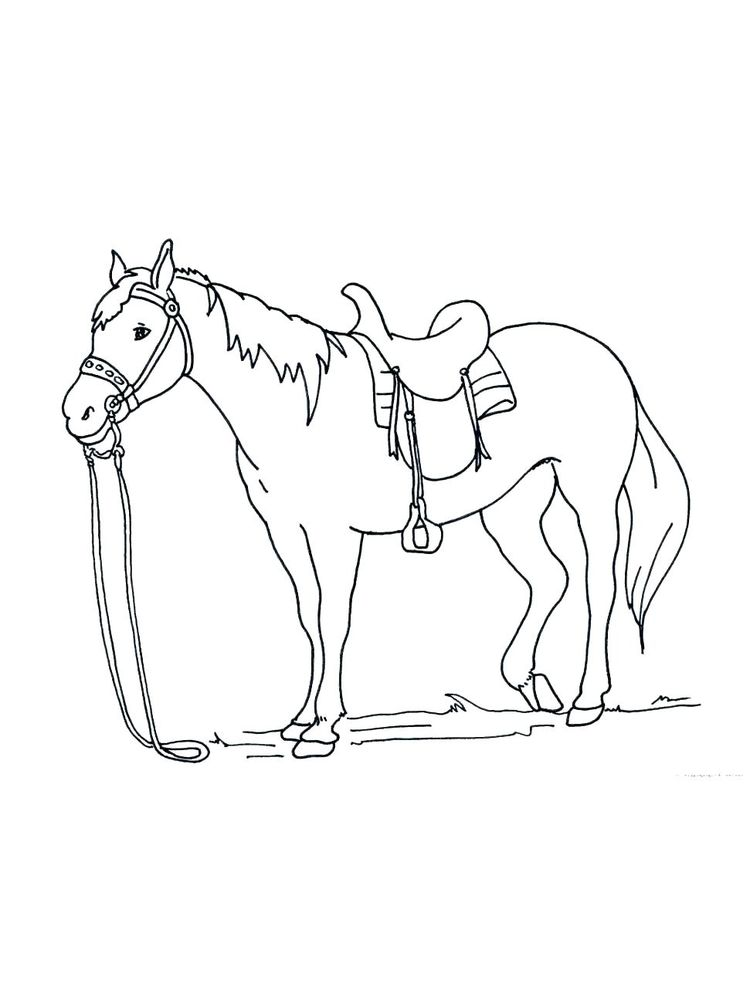 Printable wild horse coloring page image