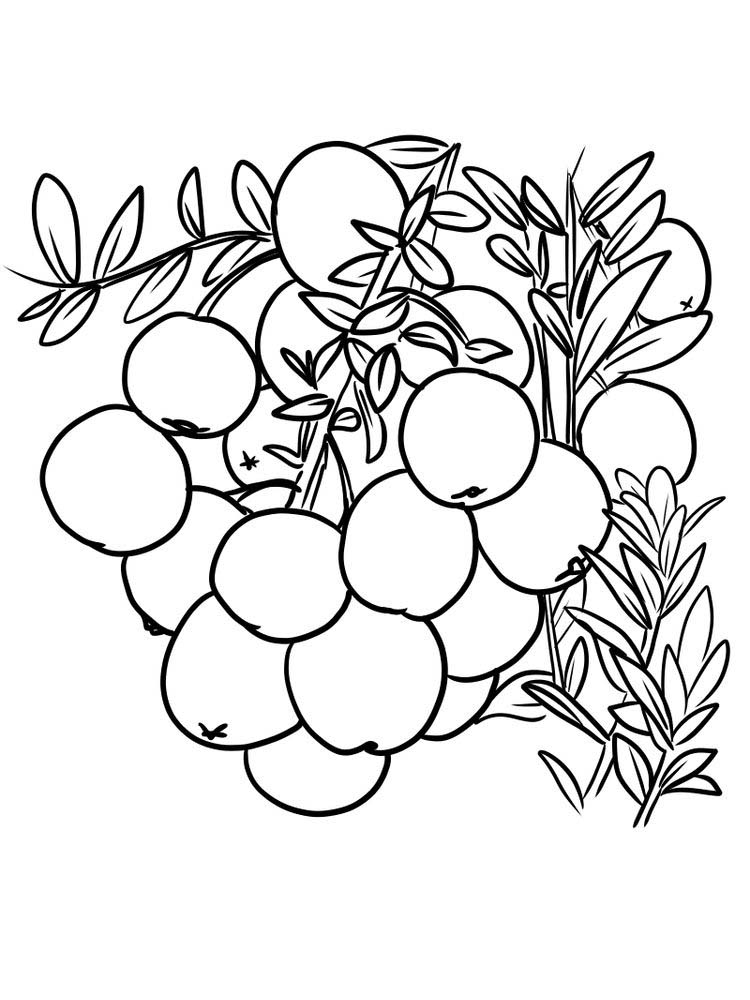 download cranberries coloring picture print