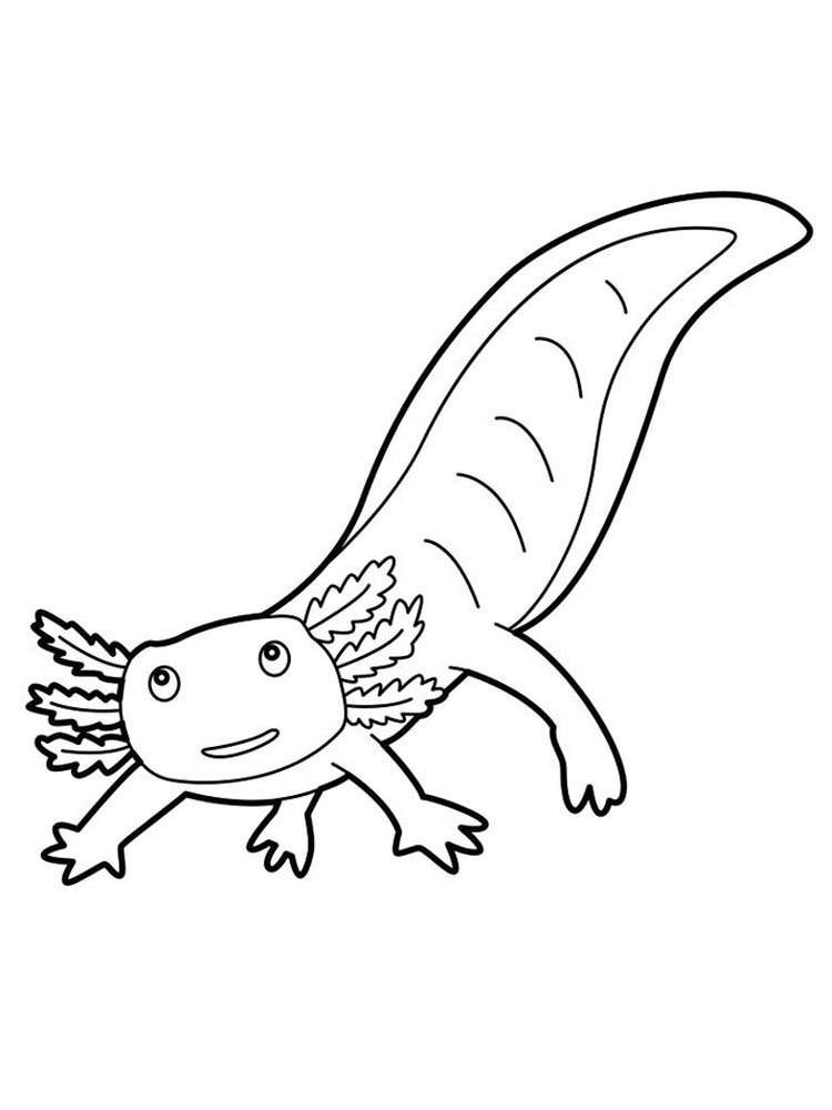 download salamander coloring pages print
