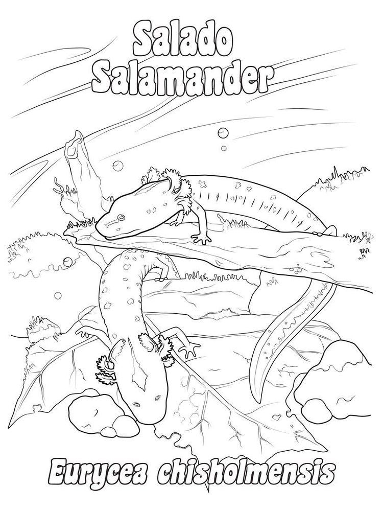 download salamander coloring pages to print