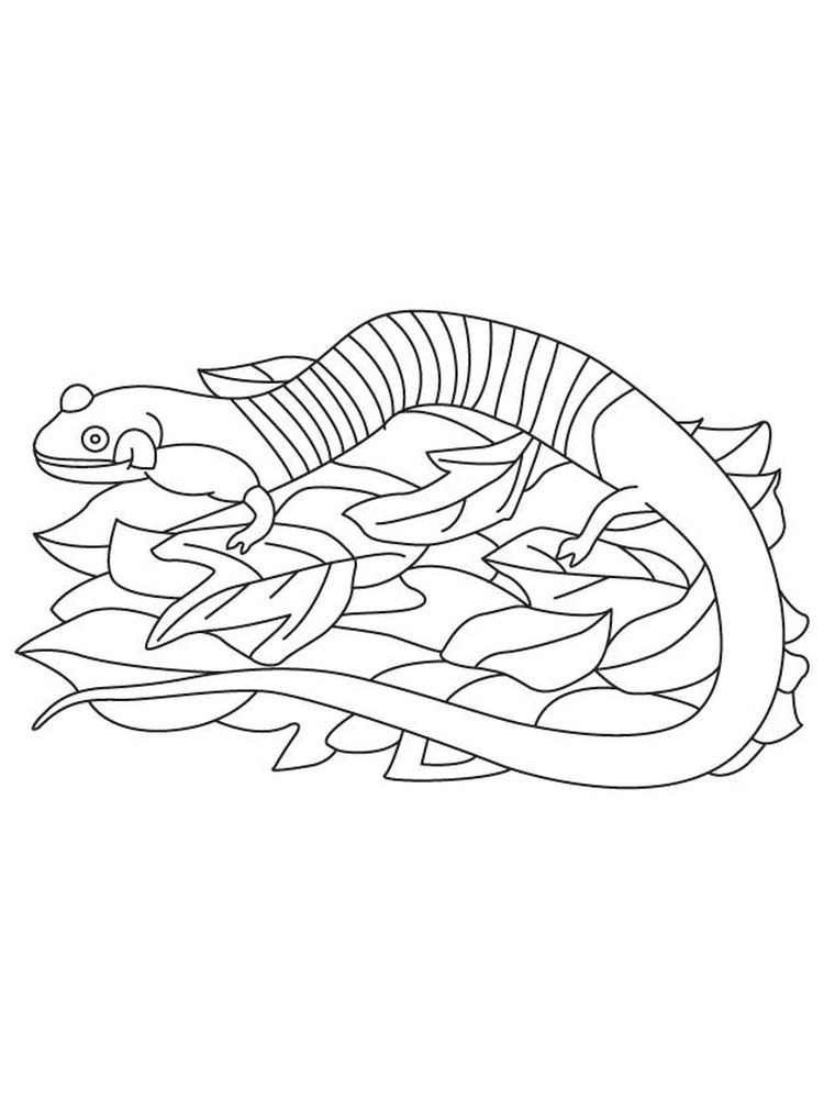 download salamander coloring pages