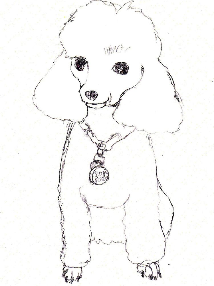free poodle coloring page