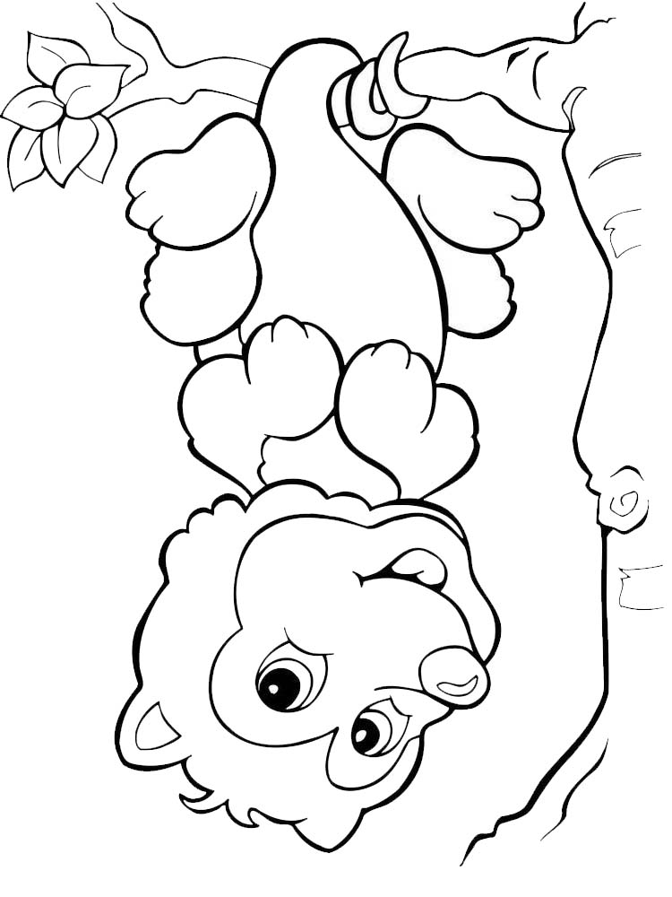 free possum coloring pages printable