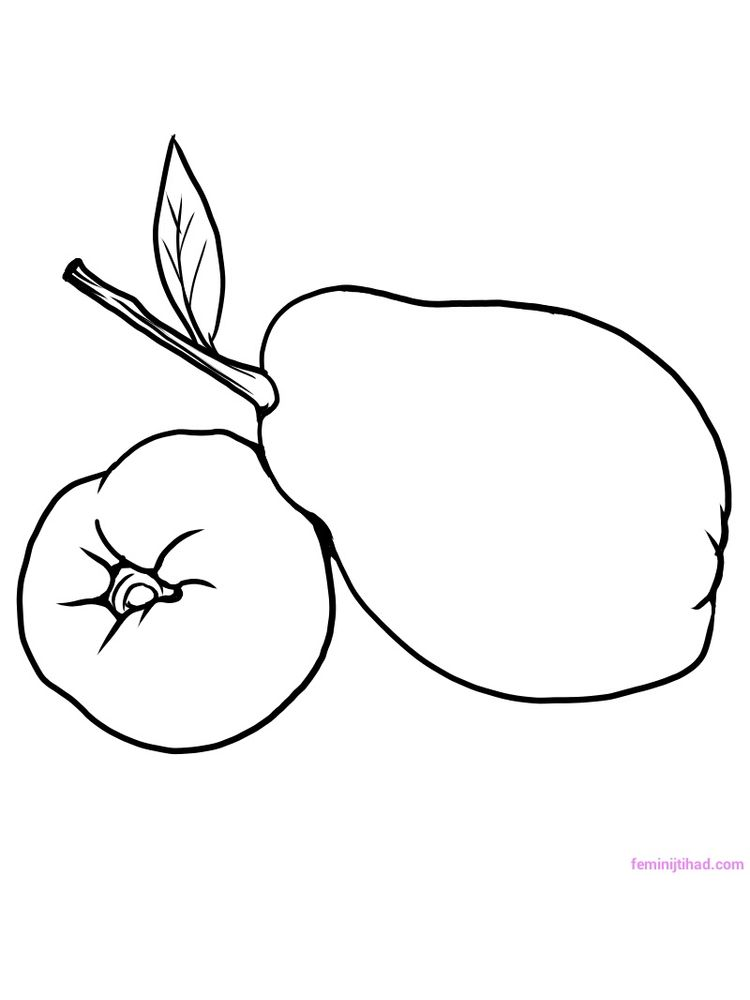 free quince coloring sheet printable