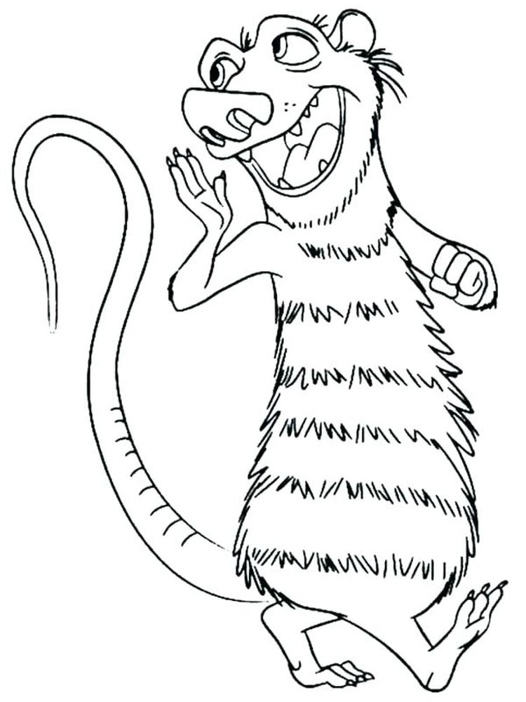 possum coloring pages download free