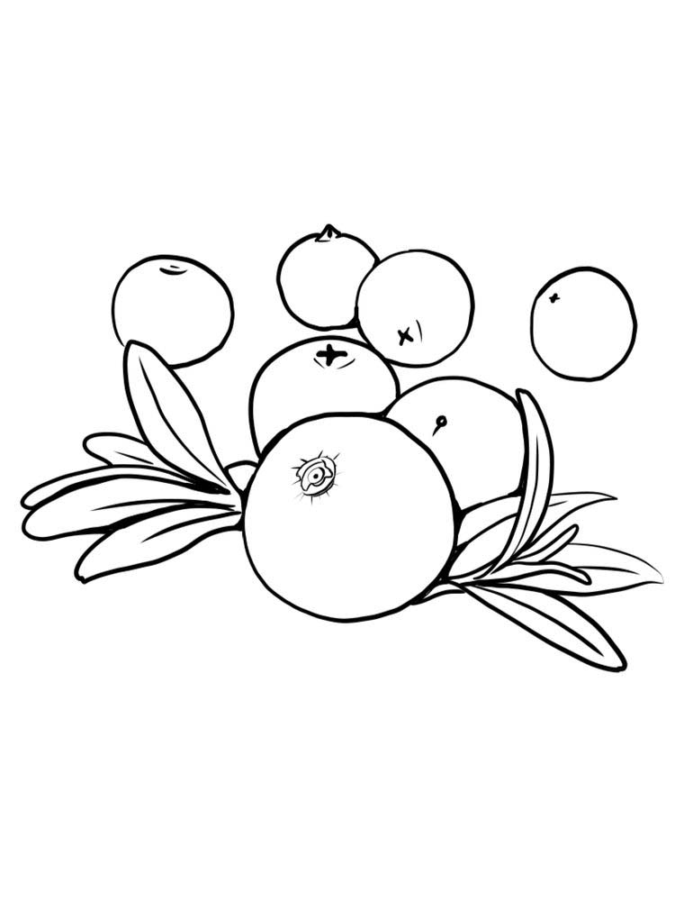 printable coloring pages of cranberries free
