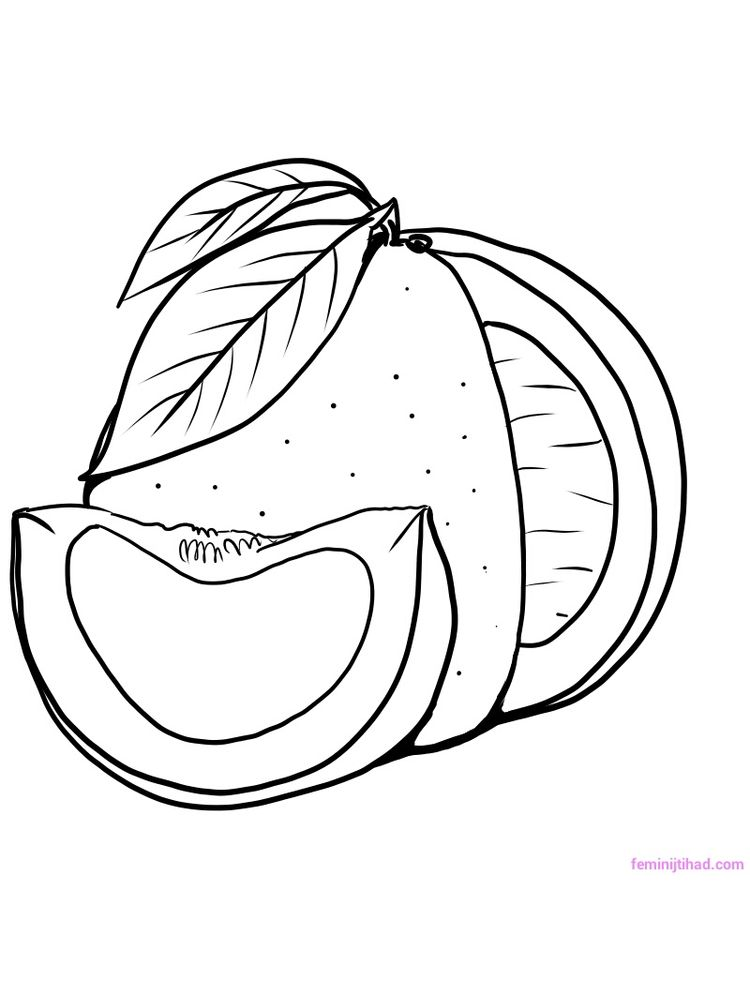 printable pomelo coloring pict