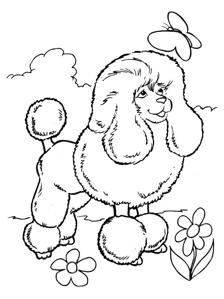 printable poodle coloring pages download