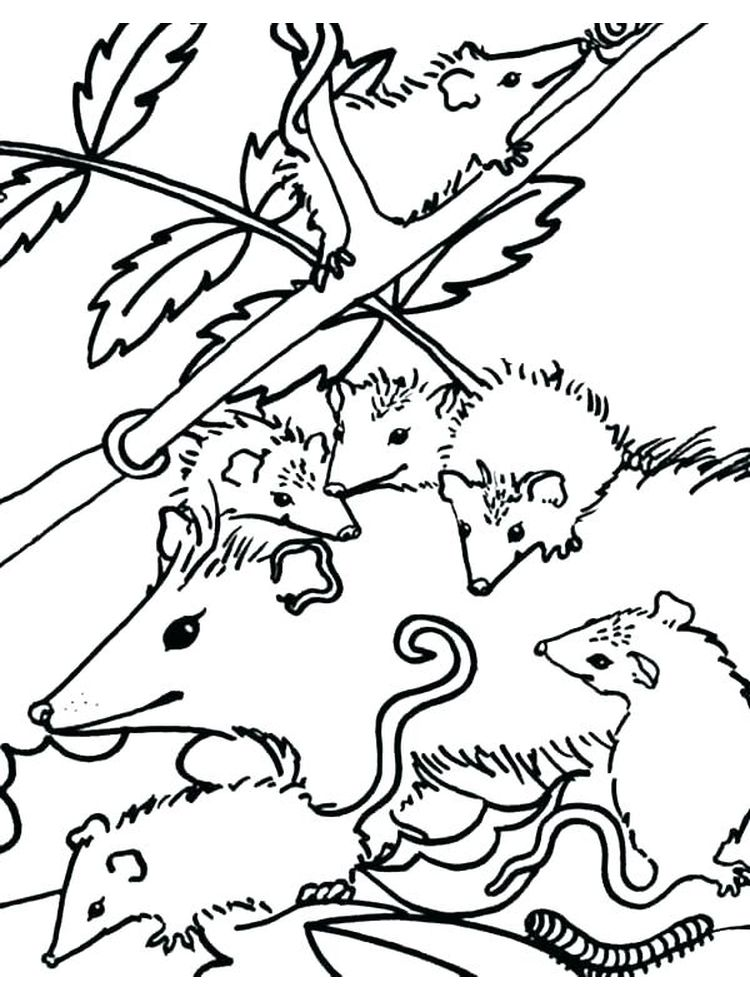 printable possum coloring pages pdf