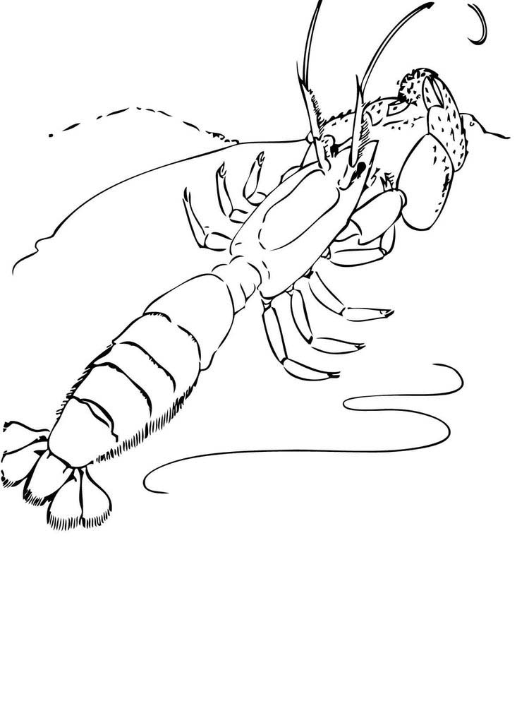 printable prawn coloring pages free