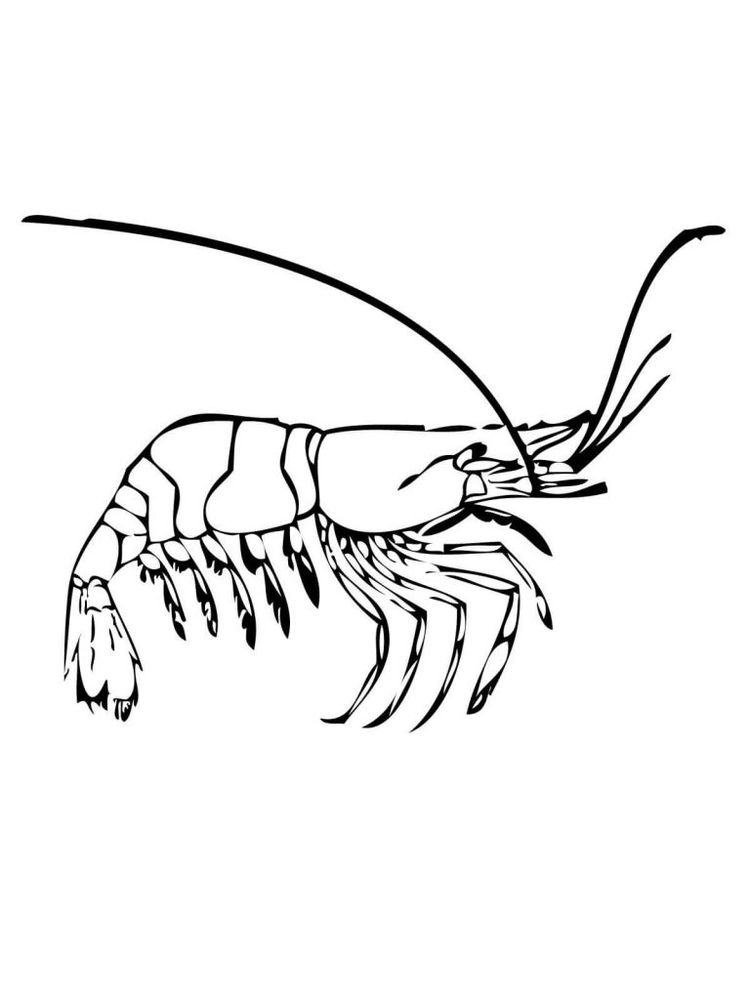 printable prawn coloring pages image