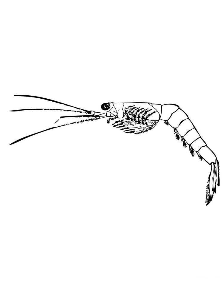 printable prawn coloring pages pdf