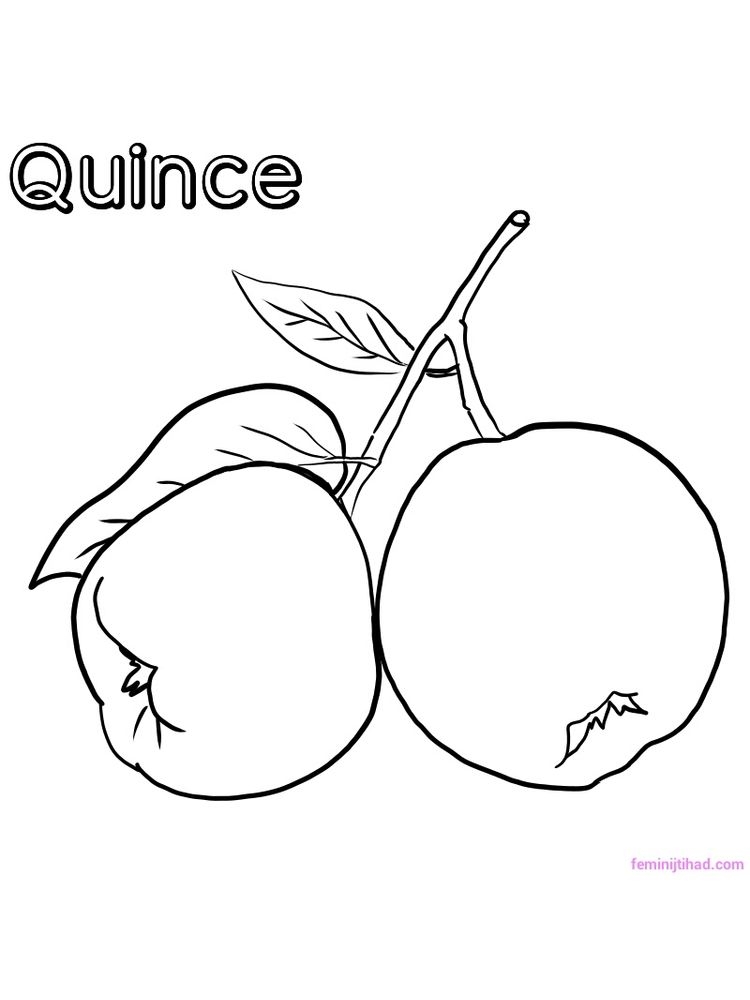 printable quince coloring image