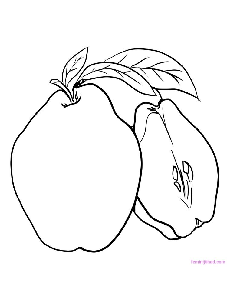 printable quince coloring page download