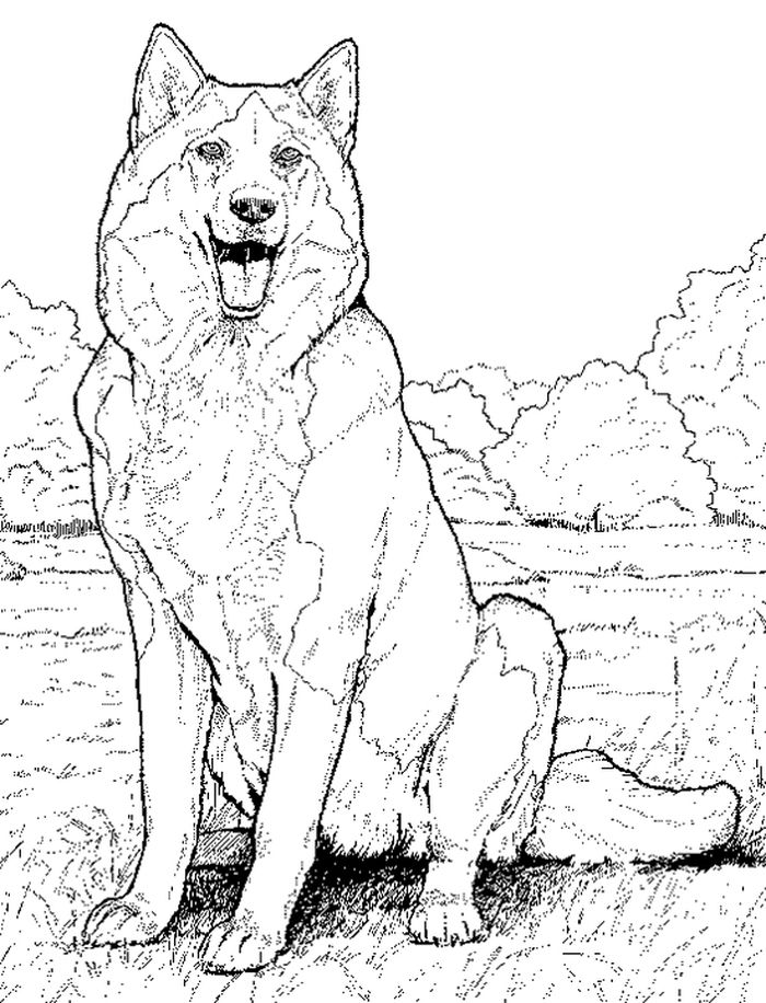 Free Husky Dog School Coloring Pages