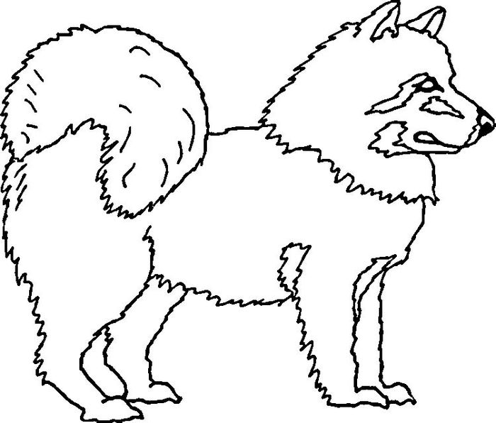 Printable Big Eye Husky Coloring Pages