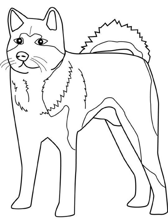 Printable Coloring Pages Husky