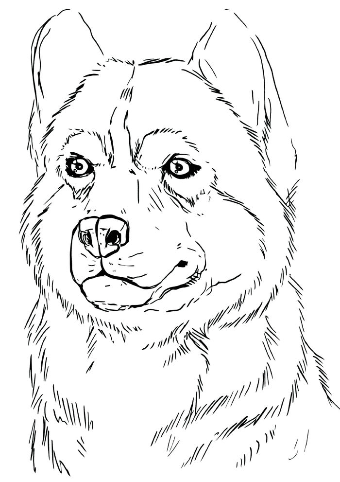Printable Coloring Pages Of Arctic Husky