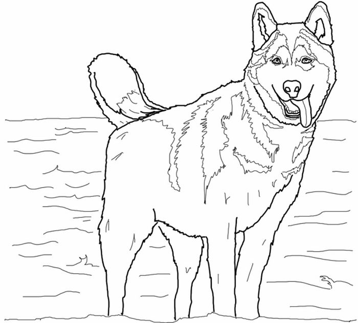 Printable Coloring Pages Of Storm The Husky