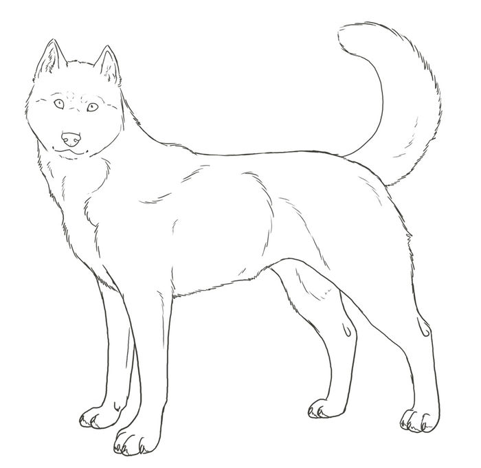 Printable Cute Husky Coloring Pages