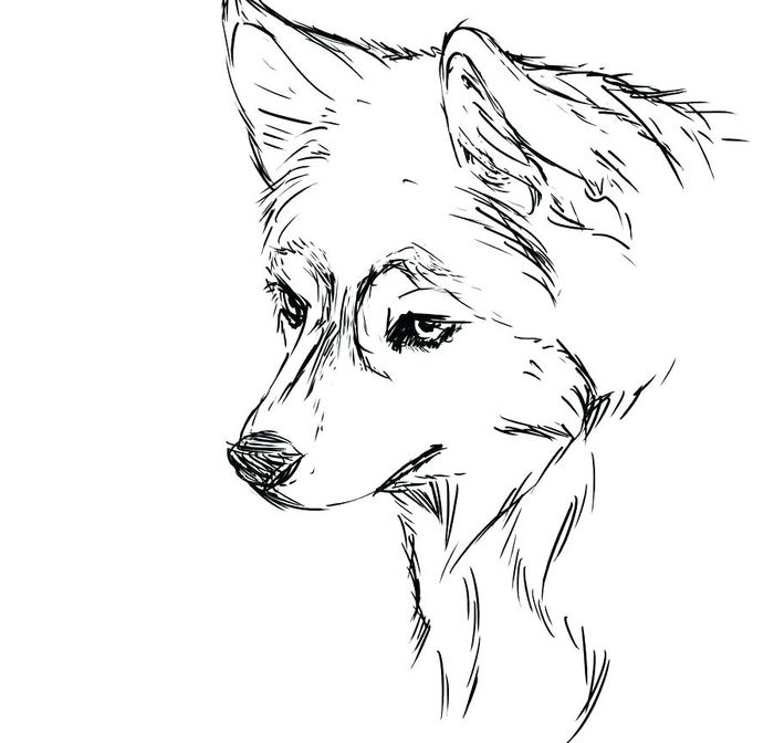 Printable Cute Realistic Husky Coloring Pages