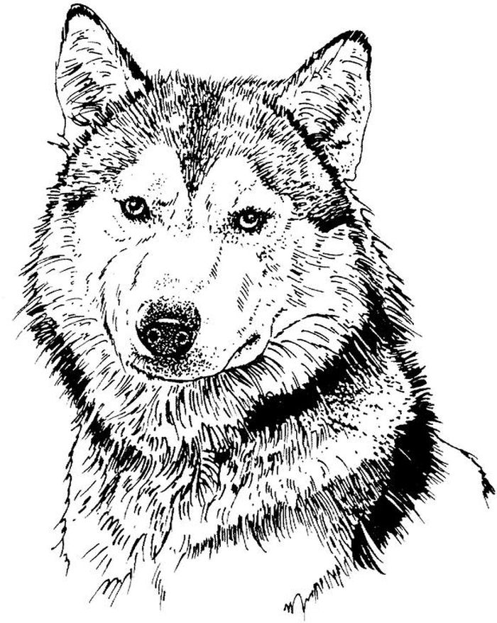 Printable Hard Pattern Coloring Pages Husky
