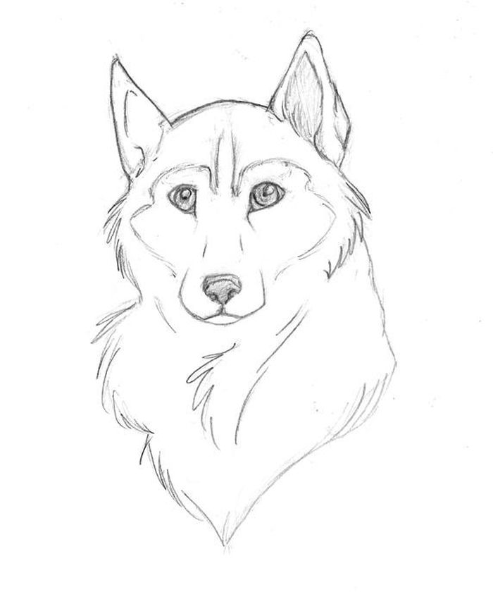 Printable Hard Pattern Coloring Pages Siberian Husky