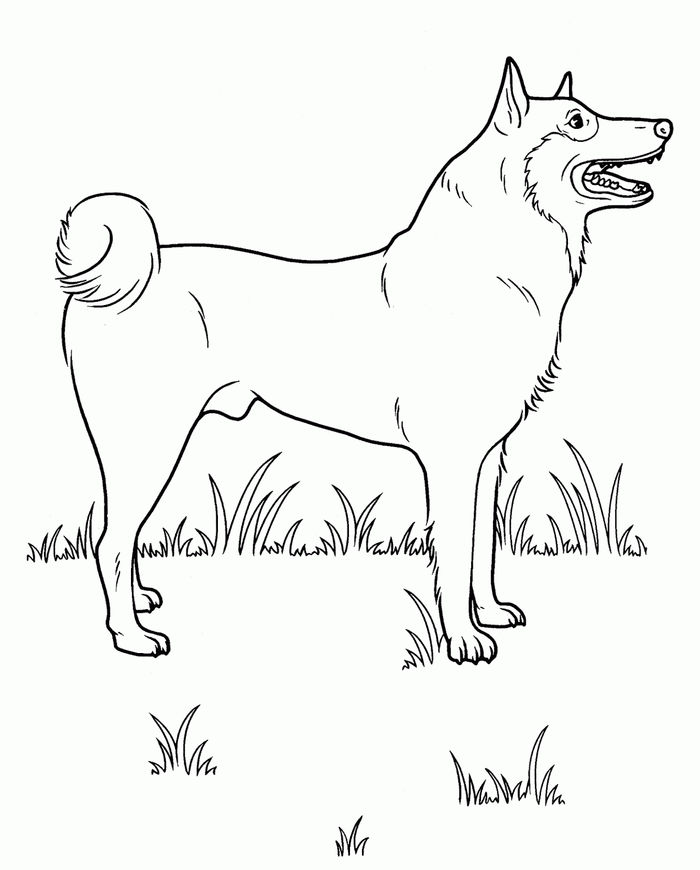Printable Husky Bath Coloring Pages