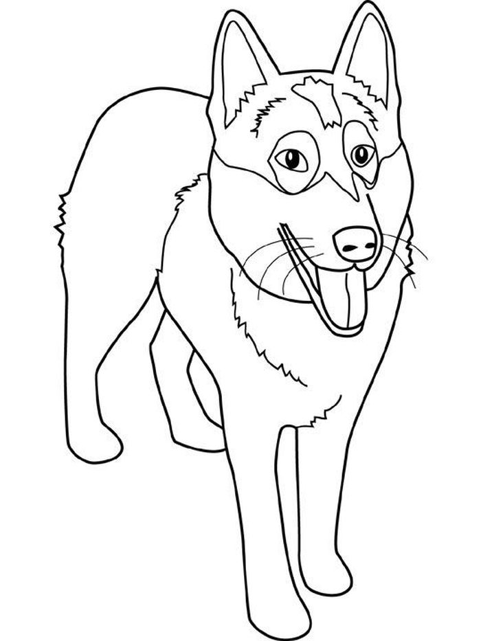 Printable Husky Coloring Pages Printable