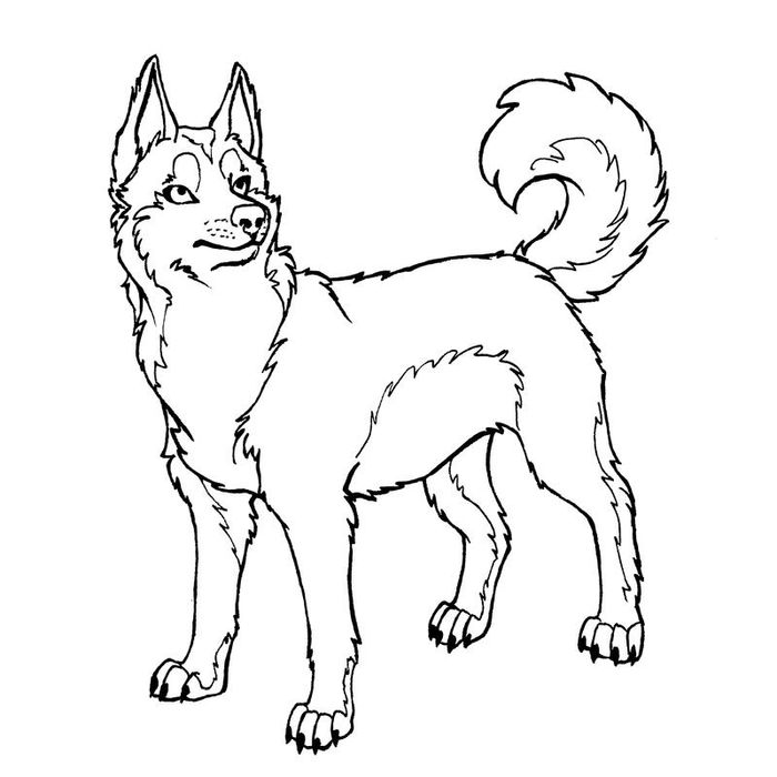 Printable Husky Coloring Pages