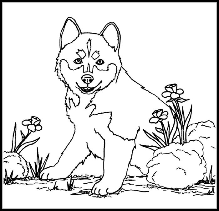 Printable Inuit Husky Coloring Pages